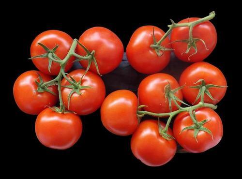 Nace un mito del tomate - Más sobre la maduración del tomate