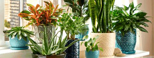 Aumenta la humedad con muchas plantas, foto The Home Depot