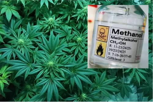 ¿La pulverización foliar de metanol producirá plantas más grandes?