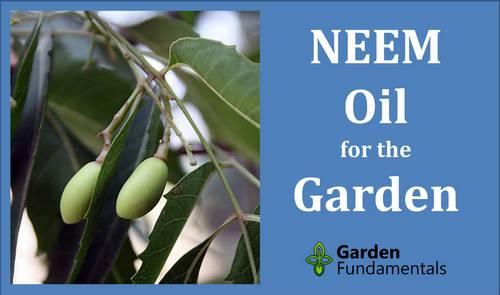 Insecticida y fungicida para plantas con aceite de neem, fuente de la imagen: Hayavadhan