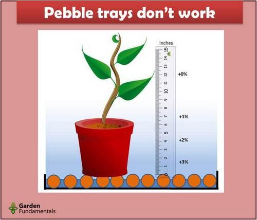 Mayor humedad para las plantas de interior: lo que funciona y lo que no