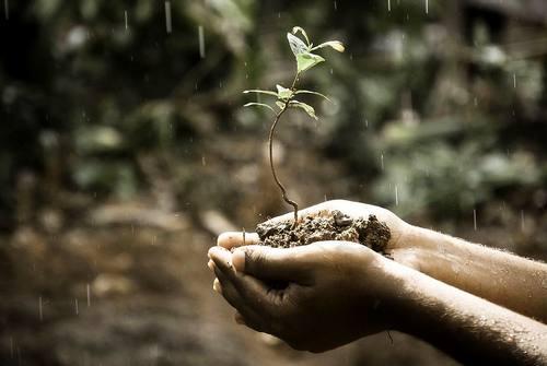 Entendiendo el suelo - un nuevo curso ofrecido por Mother Earth News