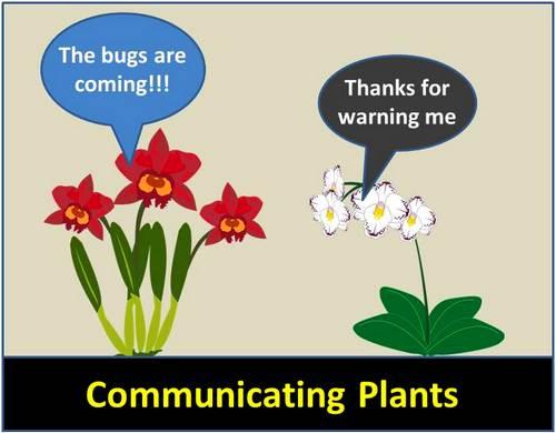 Comunicaciones de la planta - ¿Pueden las plantas hablar con otras plantas?